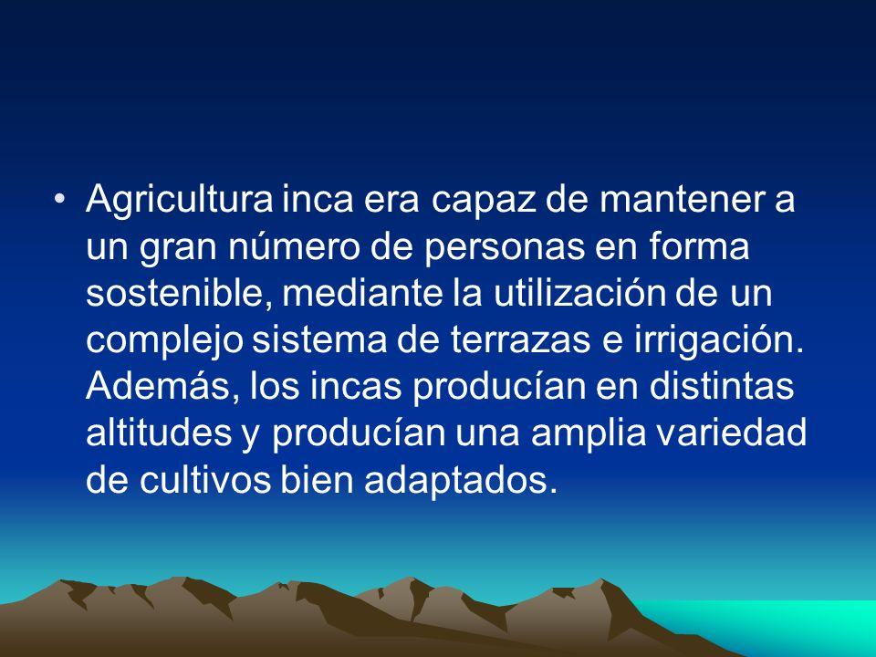 Agricultura inca era capaz de mantener a un gran número de personas en forma sostenible, mediante la utilización de un complejo sistema de terrazas e irrigación.