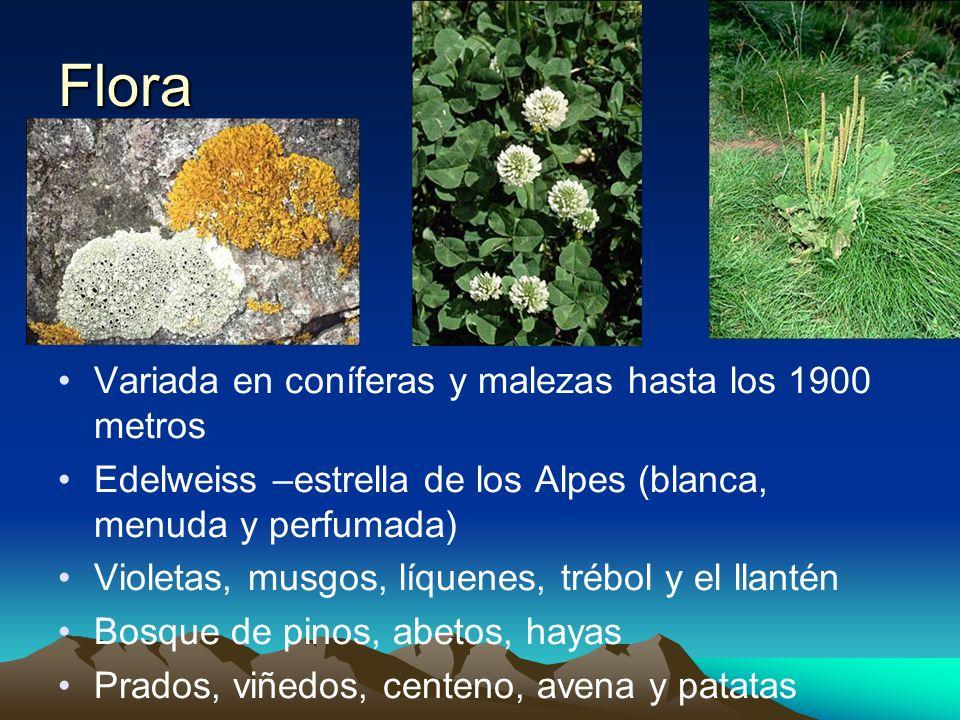 Flora Variada en coníferas y malezas hasta los 1900 metros