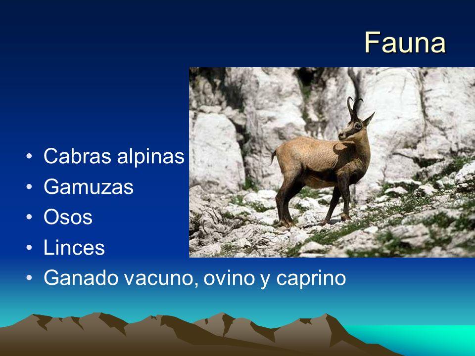 Fauna Cabras alpinas Gamuzas Osos Linces