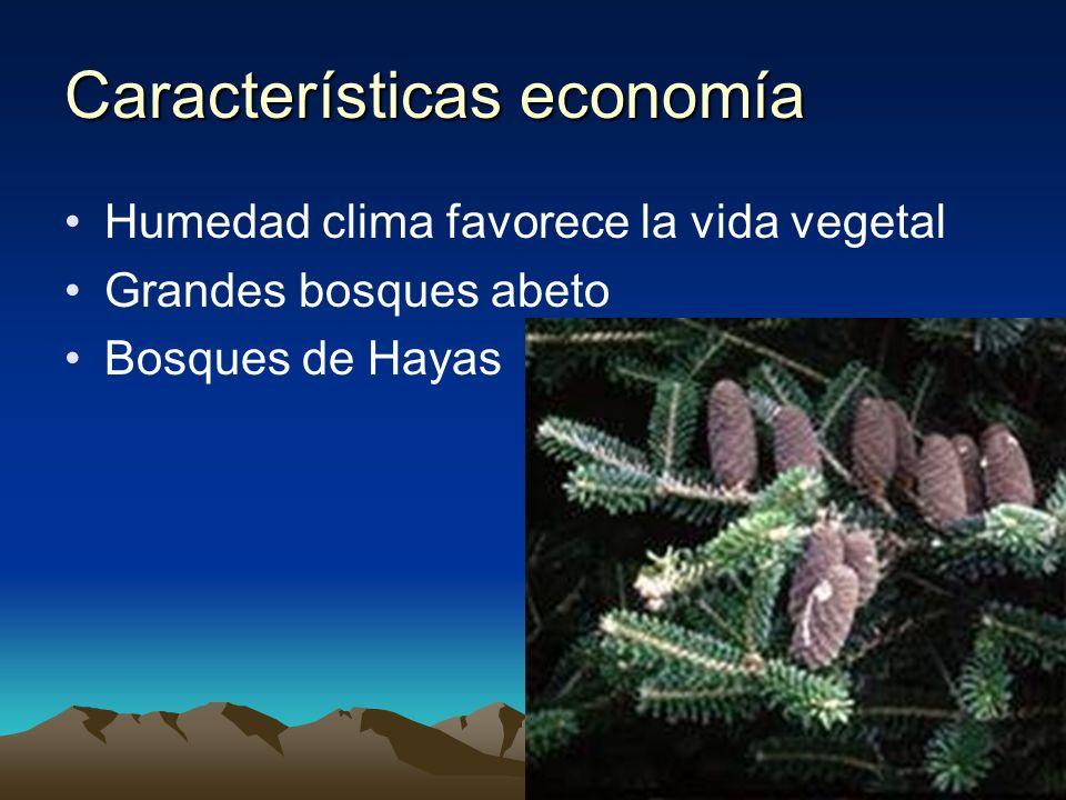 Características economía