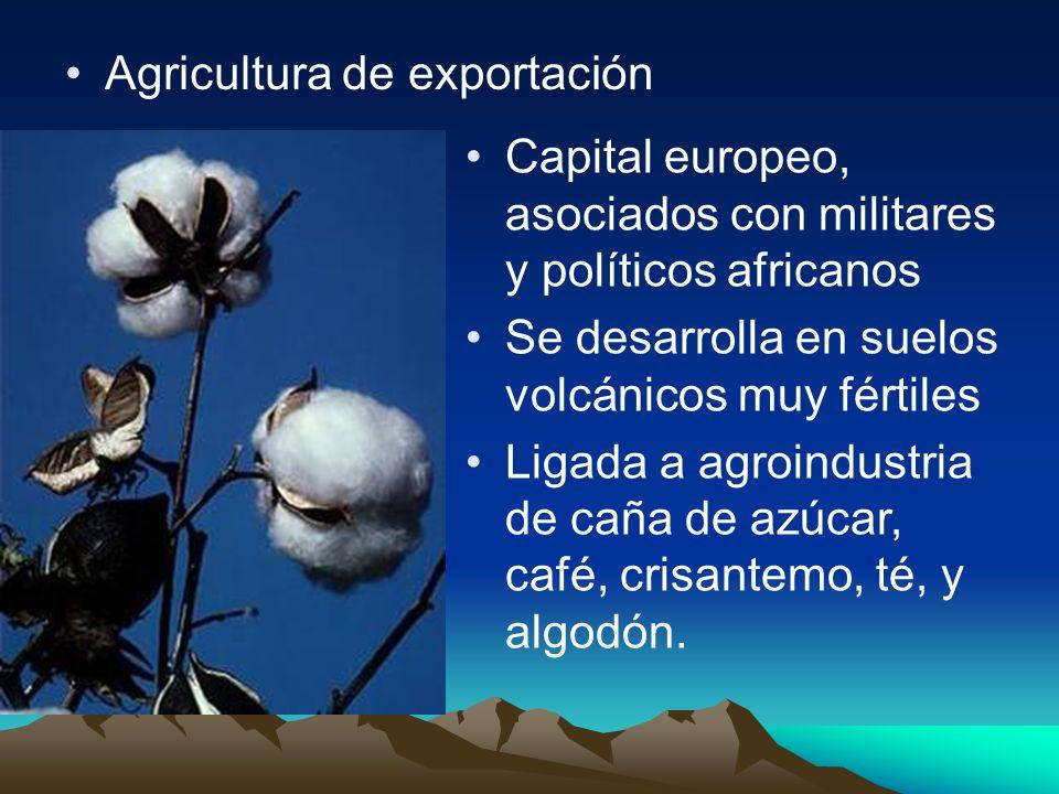 Agricultura de exportación