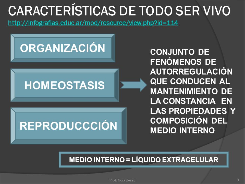 MEDIO INTERNO = LÍQUIDO EXTRACELULAR
