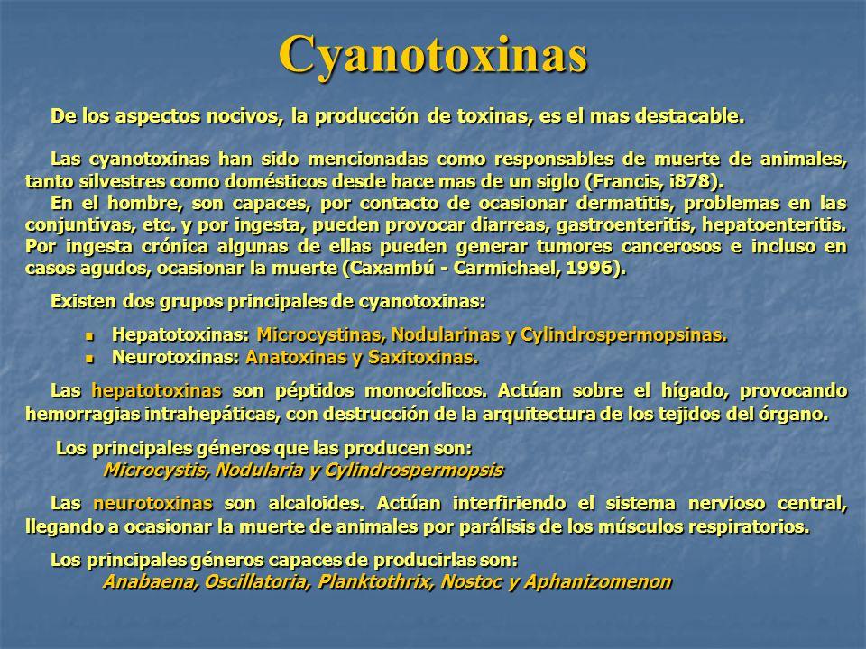 Cyanotoxinas De los aspectos nocivos, la producción de toxinas, es el mas destacable.