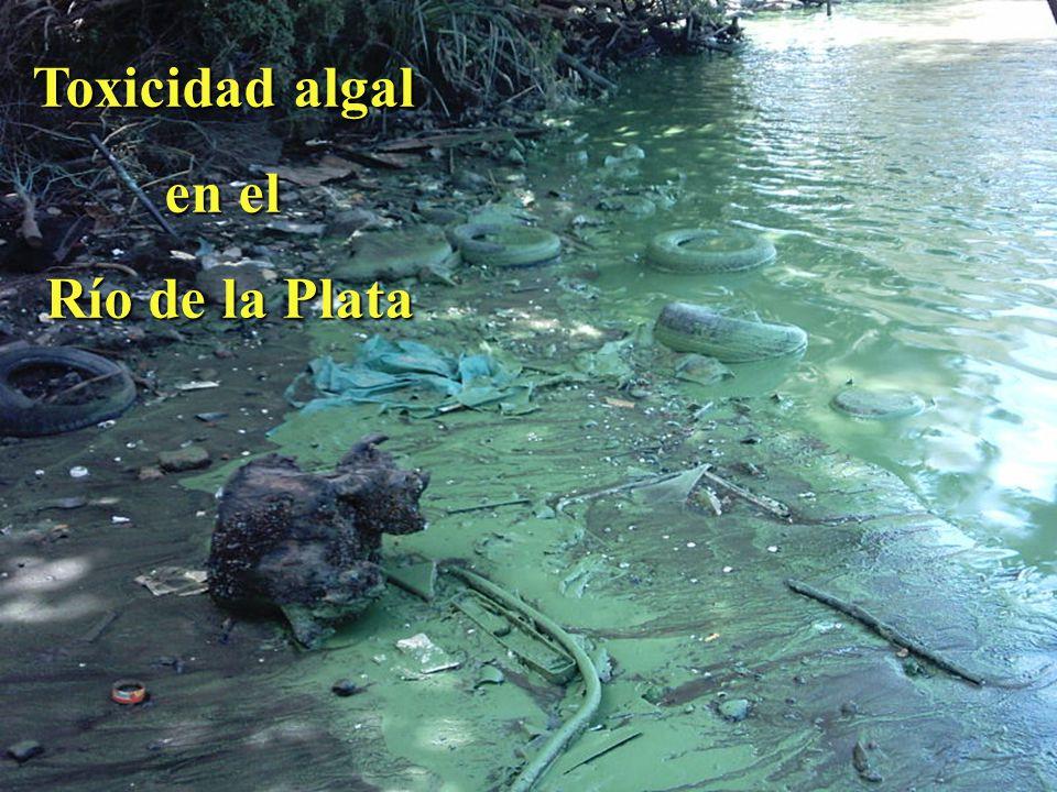 Toxicidad algal en el Río de la Plata