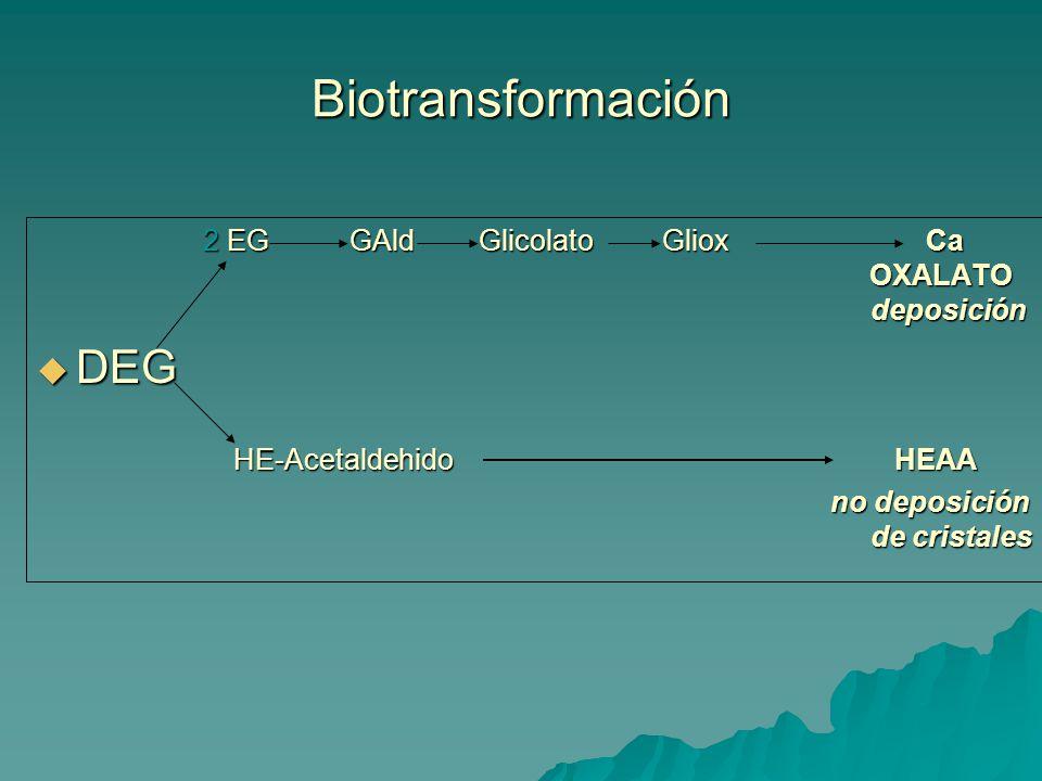 Biotransformación DEG 2 EG GAld Glicolato Gliox Ca OXALATO deposición