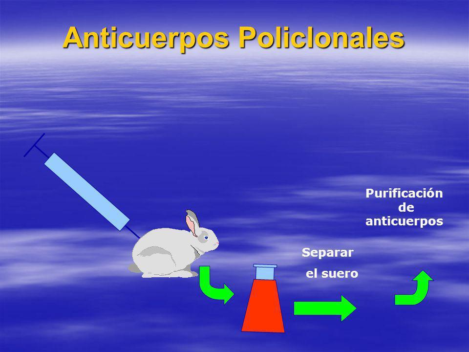 Anticuerpos Policlonales