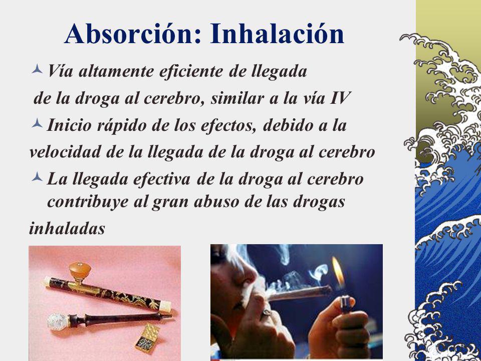 Absorción: Inhalación