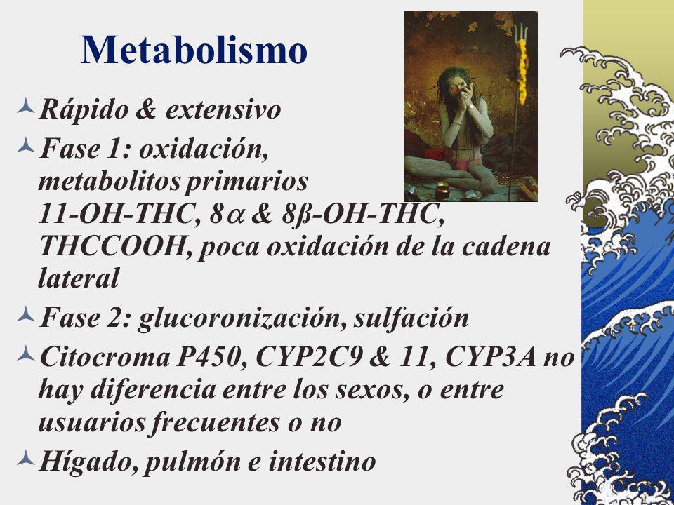 Metabolismo Rápido & extensivo