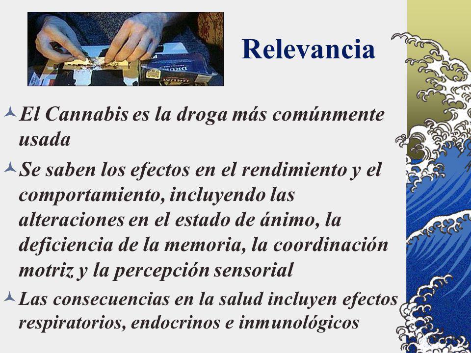Relevancia El Cannabis es la droga más comúnmente usada