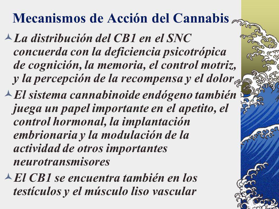Mecanismos de Acción del Cannabis