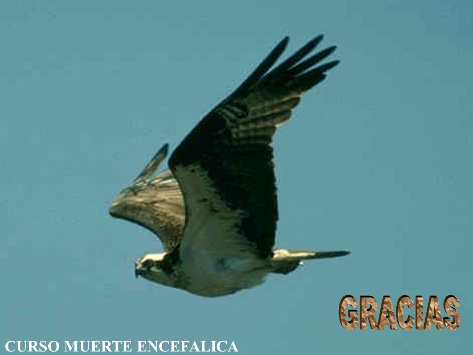 GRACIAS Prof.Dr.R.Rodriguez Rey CURSO MUERTE ENCEFALICA Tucumán 2006
