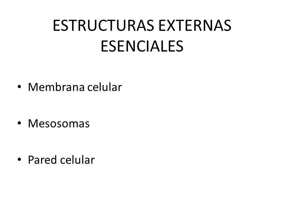 ESTRUCTURAS EXTERNAS ESENCIALES