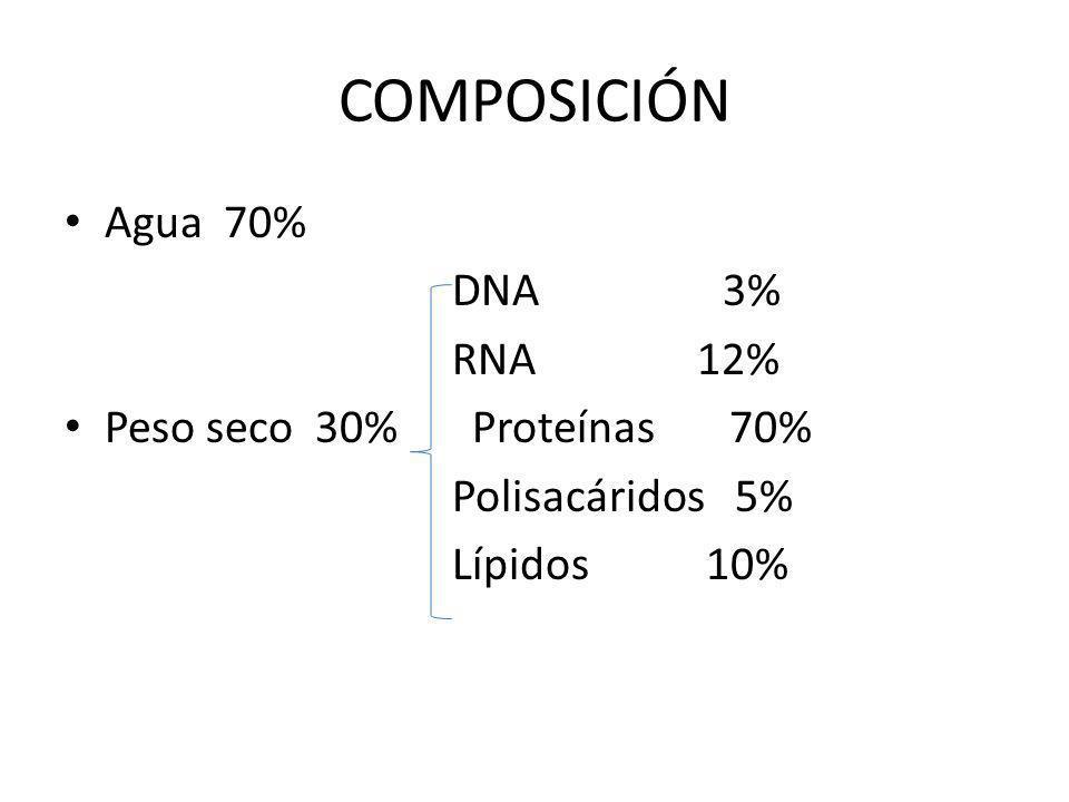 COMPOSICIÓN Agua 70% DNA 3% RNA 12% Peso seco 30% Proteínas 70%