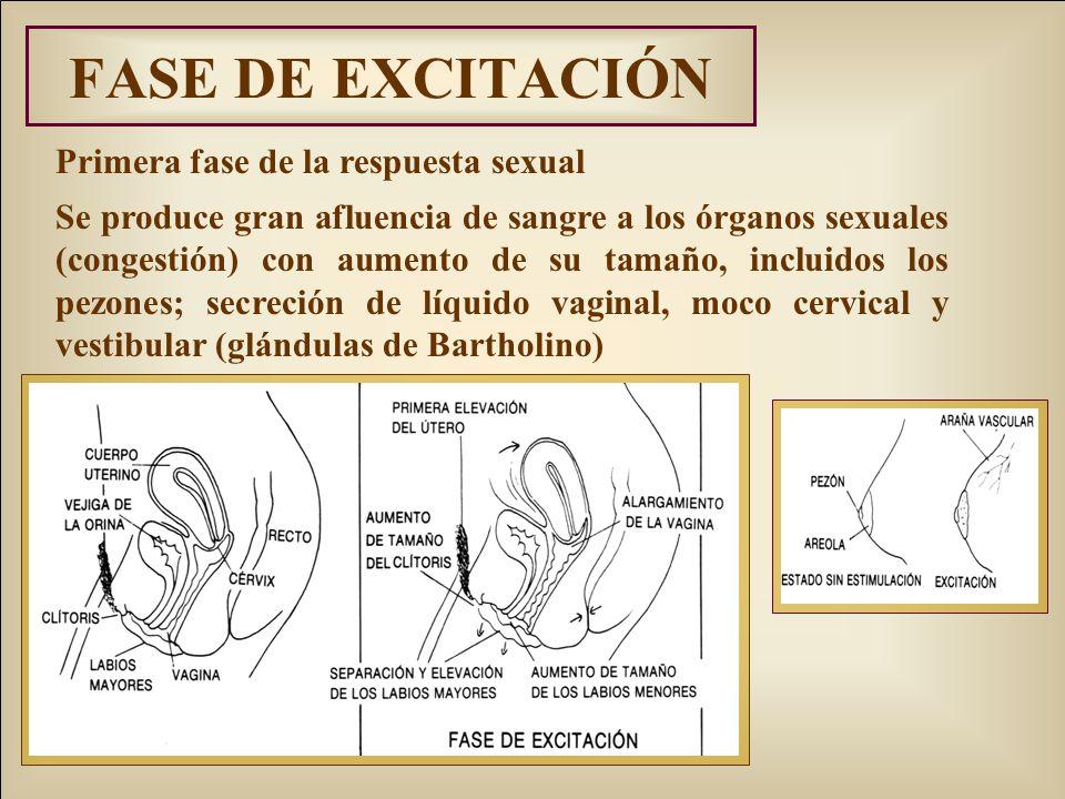 FASE DE EXCITACIÓN Primera fase de la respuesta sexual