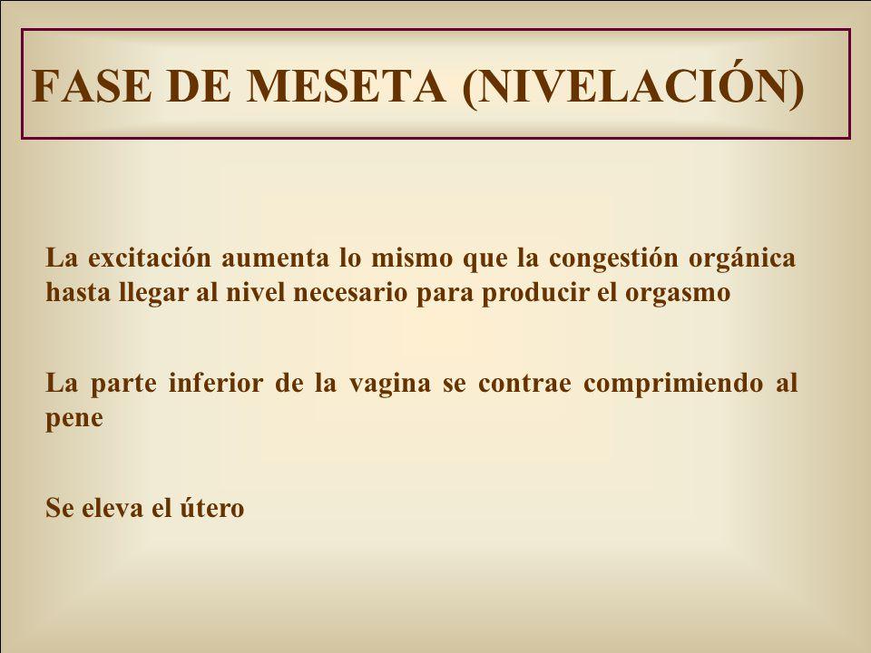 FASE DE MESETA (NIVELACIÓN)