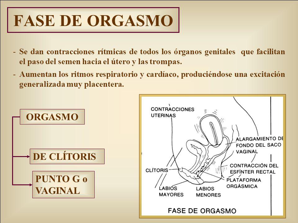 FASE DE ORGASMO ORGASMO DE CLÍTORIS PUNTO G o VAGINAL