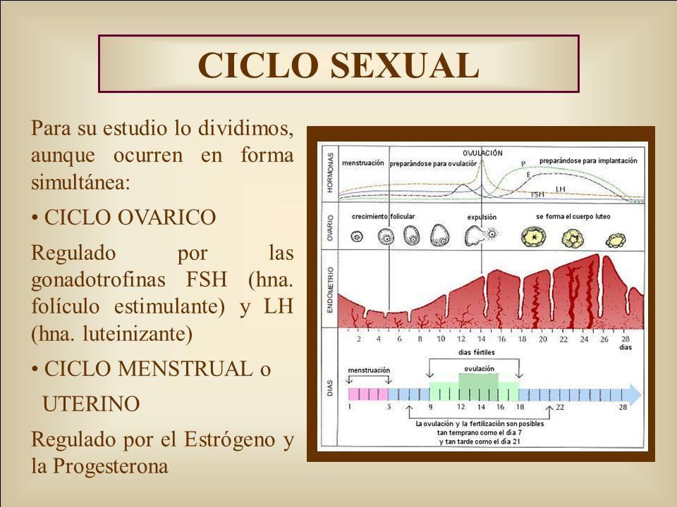 CICLO SEXUAL Para su estudio lo dividimos, aunque ocurren en forma simultánea: CICLO OVARICO.