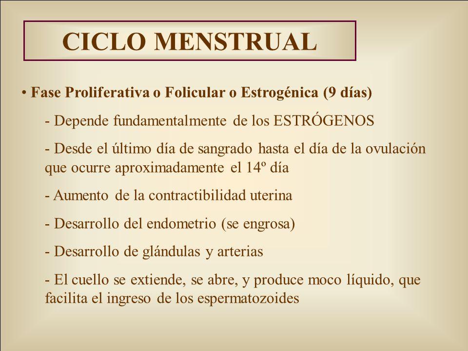 CICLO MENSTRUAL Fase Proliferativa o Folicular o Estrogénica (9 días)