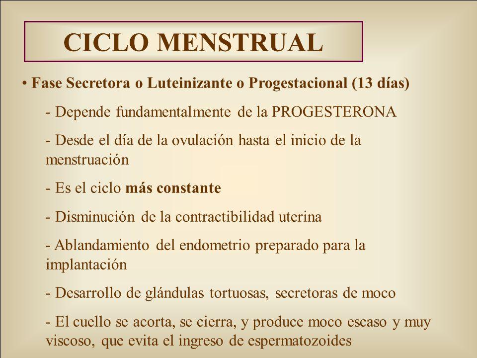 CICLO MENSTRUAL Fase Secretora o Luteinizante o Progestacional (13 días) Depende fundamentalmente de la PROGESTERONA.