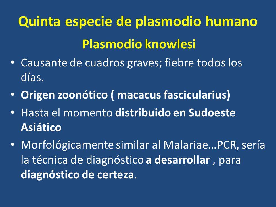 Quinta especie de plasmodio humano