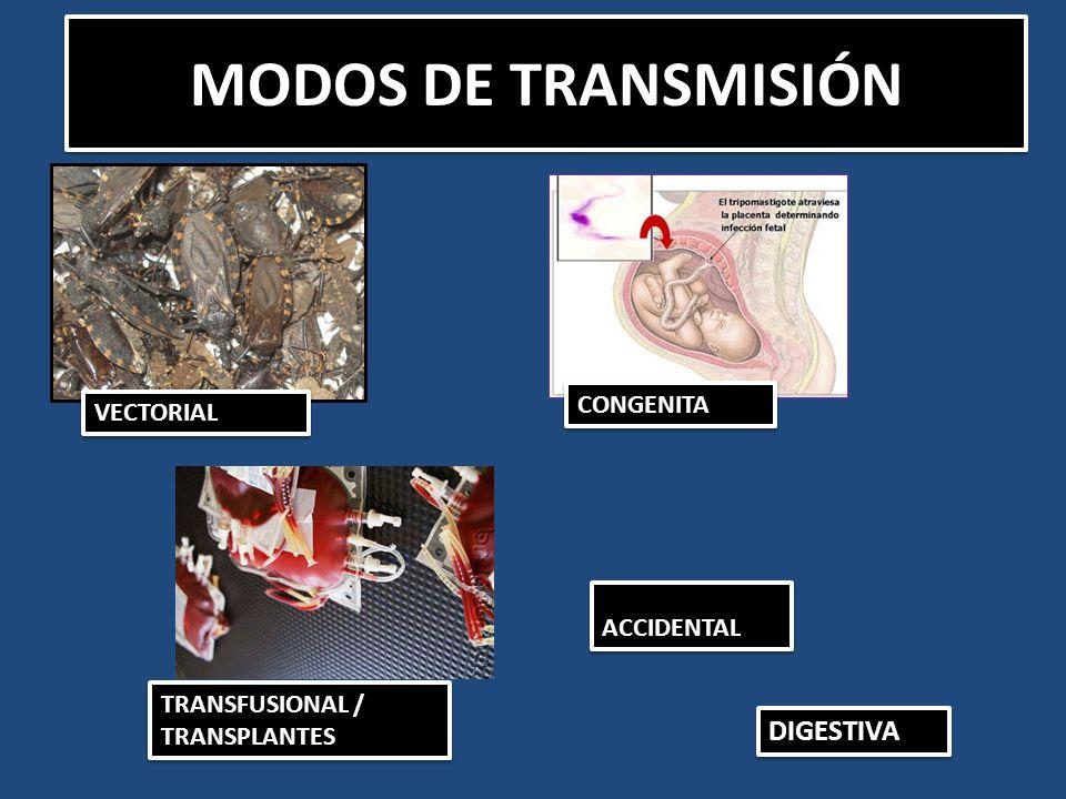 MODOS DE TRANSMISIÓN DIGESTIVA CONGENITA VECTORIAL ACCIDENTAL