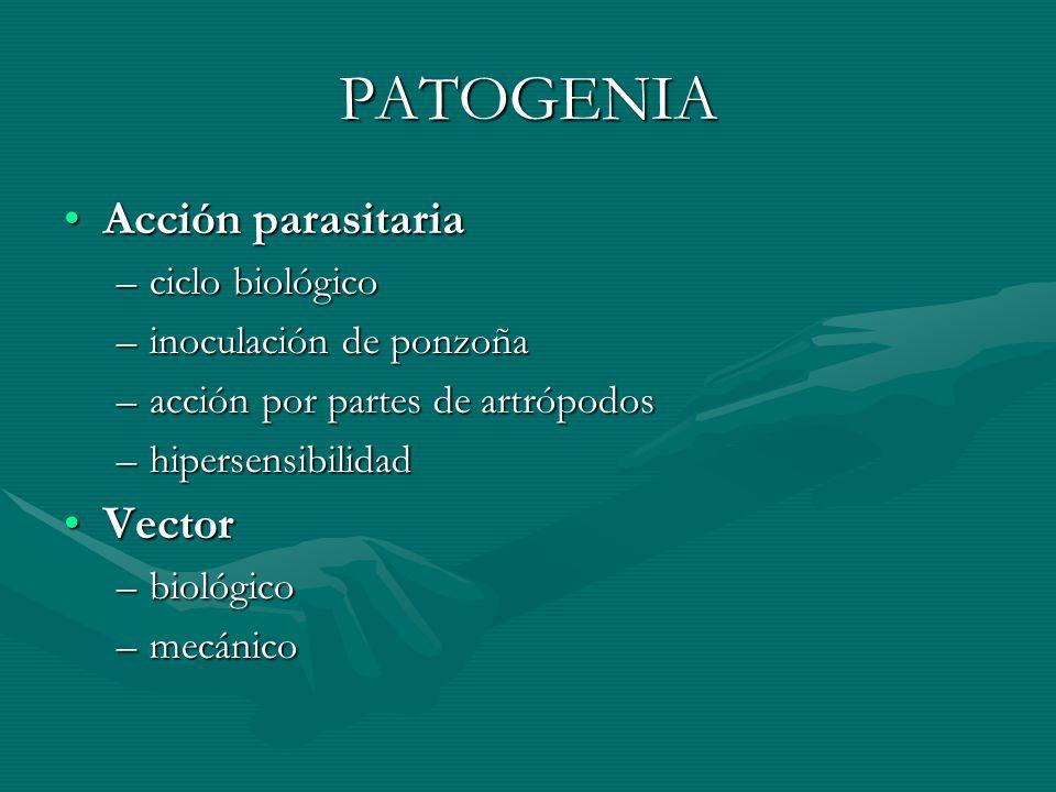 PATOGENIA Acción parasitaria Vector ciclo biológico