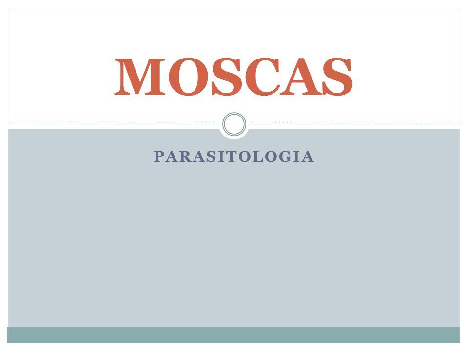MOSCAS PARASITOLOGIA