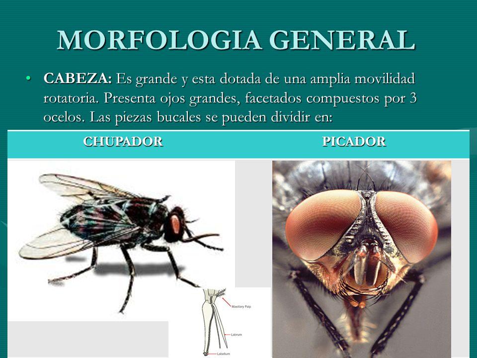 MORFOLOGIA GENERAL