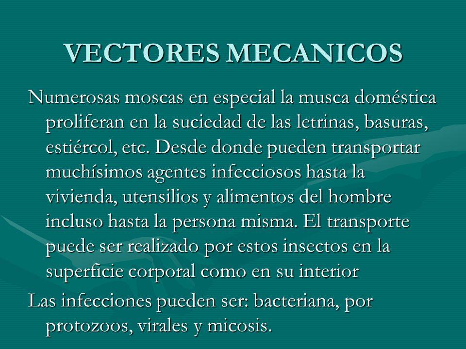 VECTORES MECANICOS