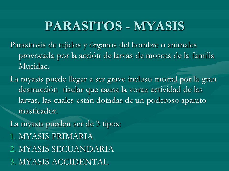 PARASITOS - MYASIS Parasitosis de tejidos y órganos del hombre o animales provocada por la acción de larvas de moscas de la familia Mucidae.