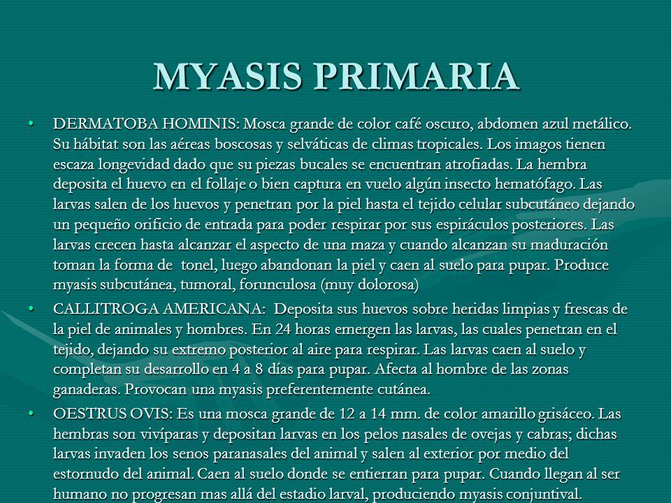 MYASIS PRIMARIA