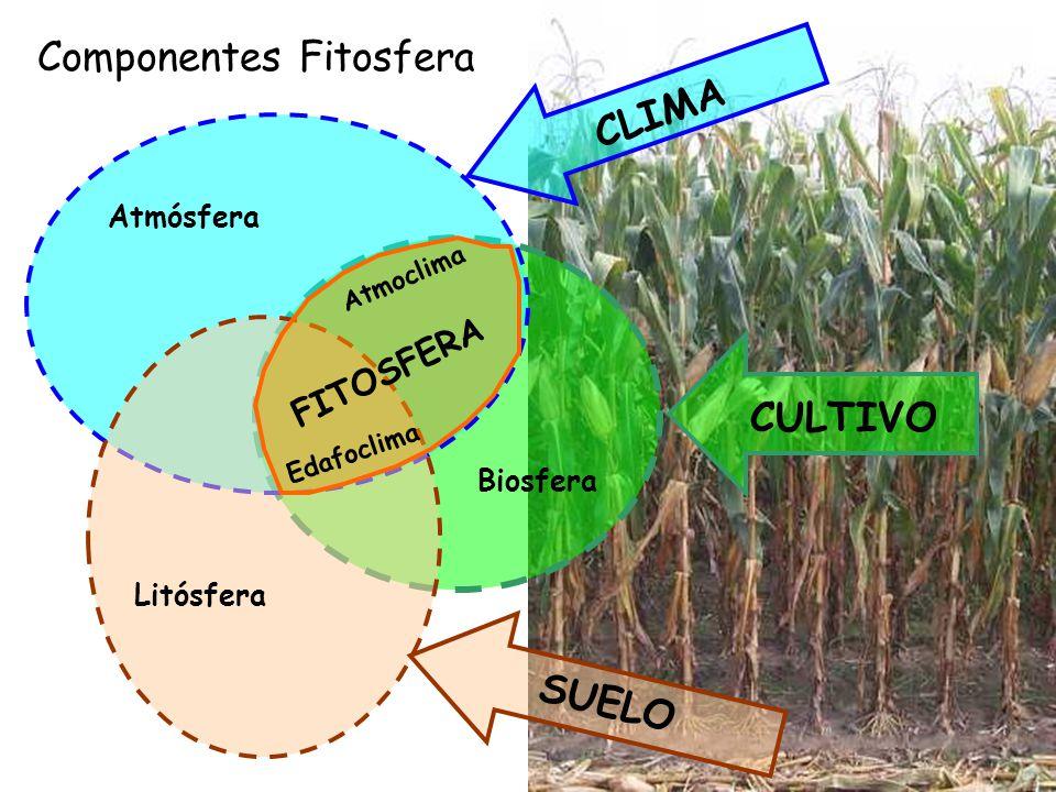 Componentes Fitosfera CLIMA
