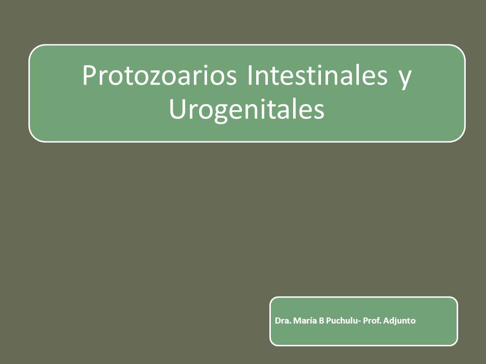 Protozoarios Intestinales y Urogenitales