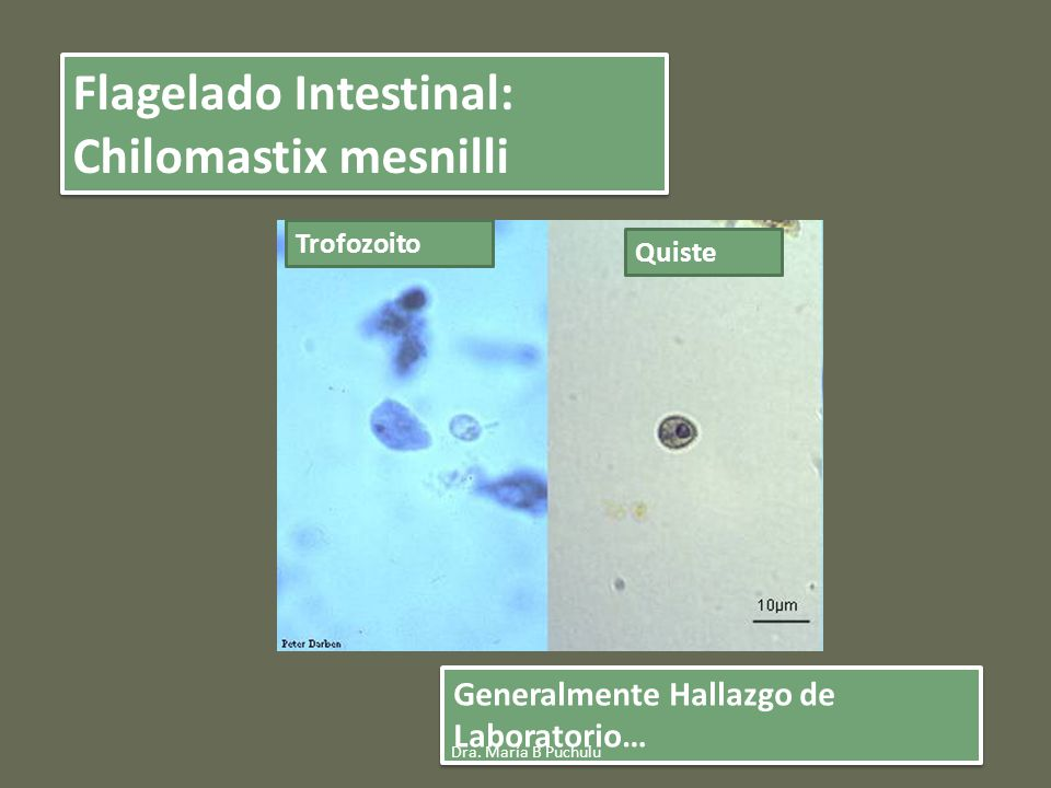 Flagelado Intestinal: Chilomastix mesnilli