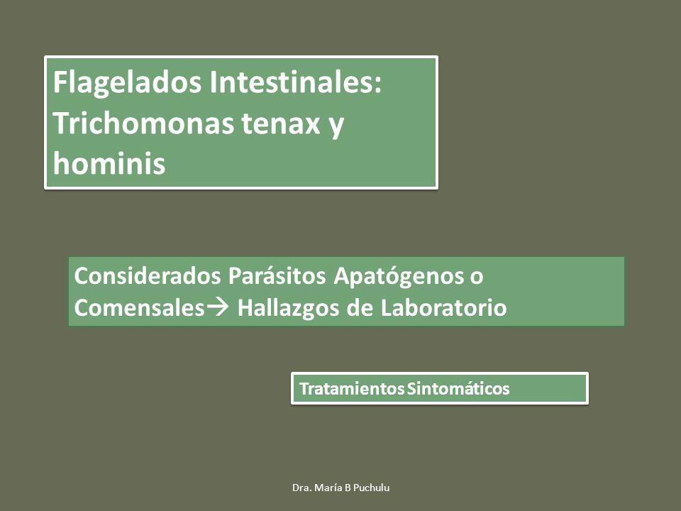 Flagelados Intestinales: Trichomonas tenax y hominis
