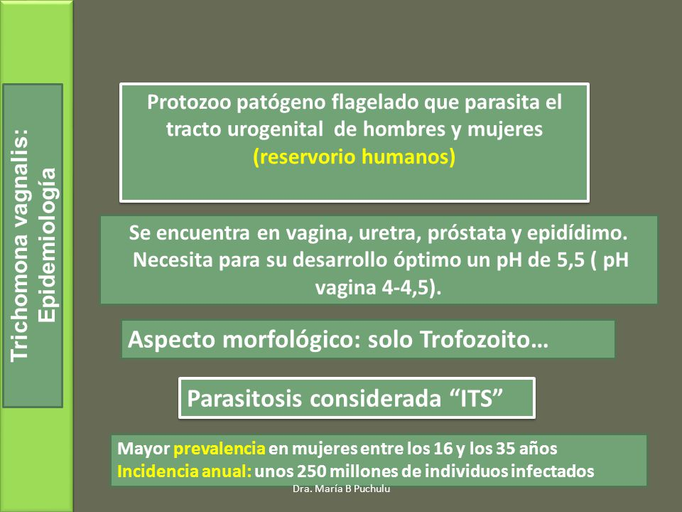 Aspecto morfológico: solo Trofozoito…