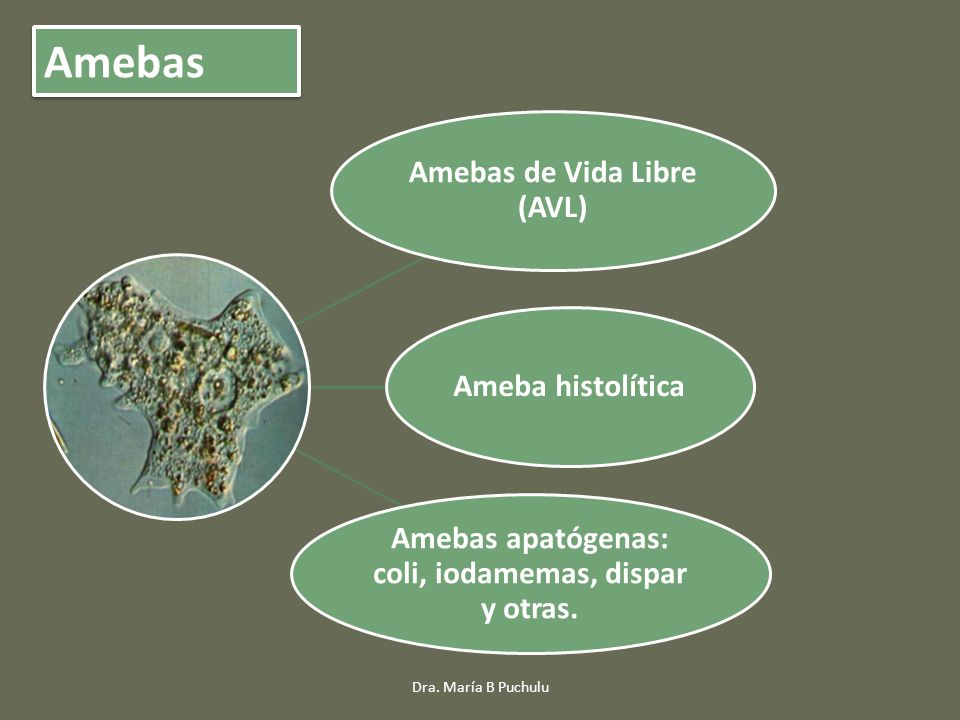 Amebas Amebas apatógenas: coli, iodamemas, dispar y otras.