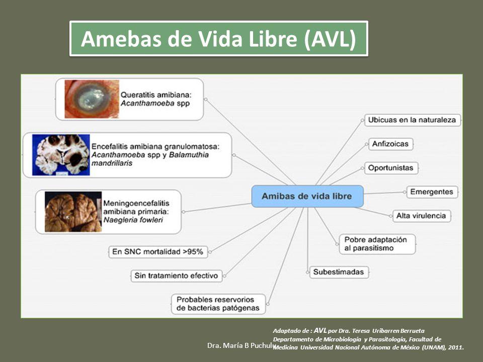 Amebas de Vida Libre (AVL)