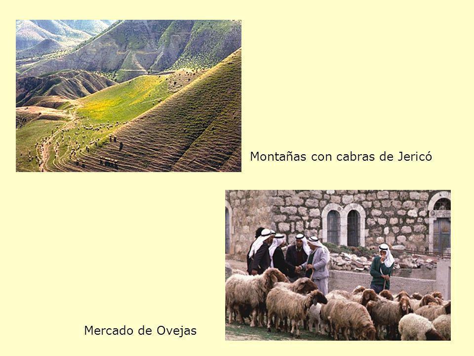 Montañas con cabras de Jericó