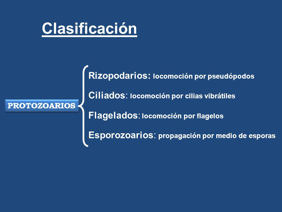 Clasificación Rizopodarios: locomoción por pseudópodos