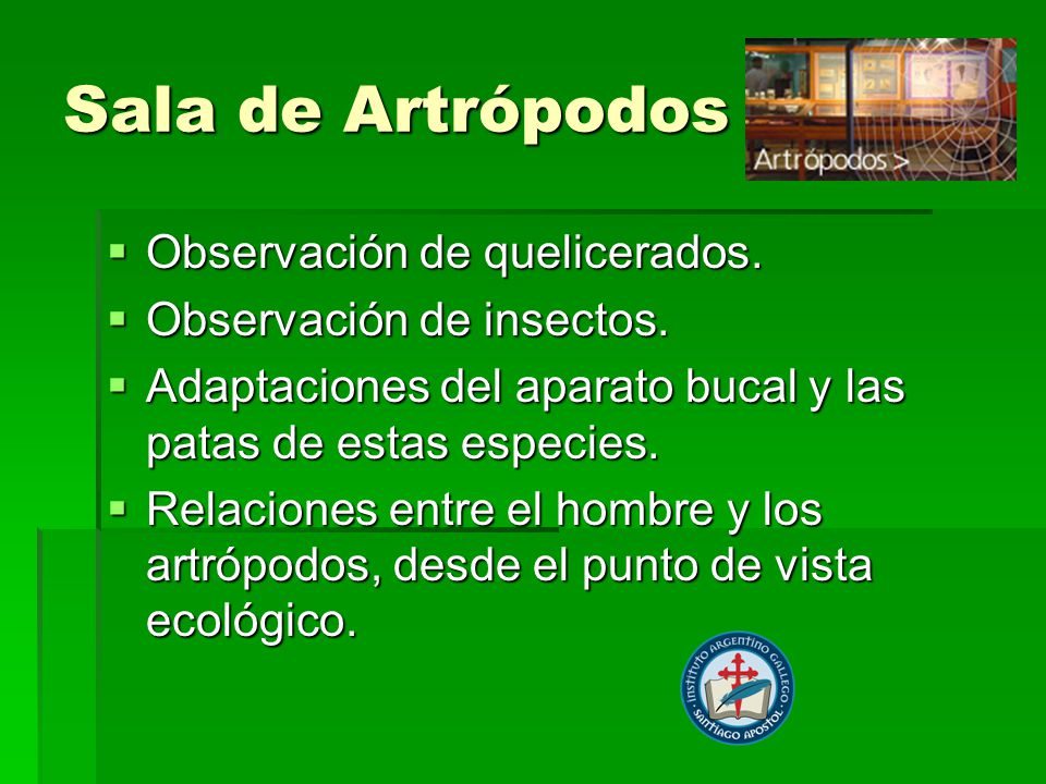 Sala de Artrópodos Observación de quelicerados.