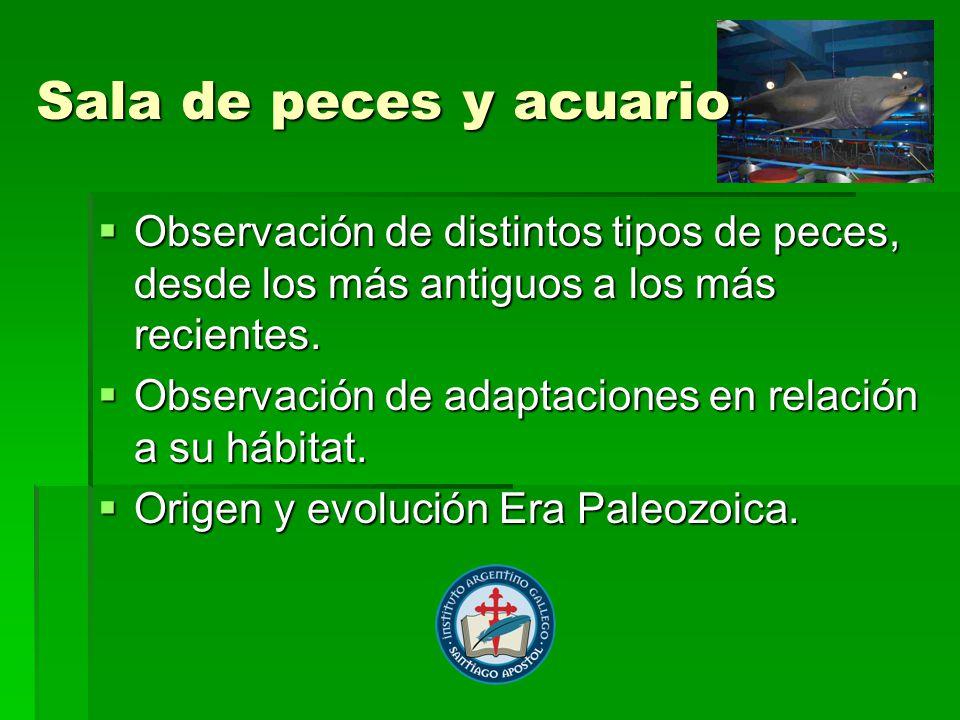 Sala de peces y acuario Observación de distintos tipos de peces, desde los más antiguos a los más recientes.