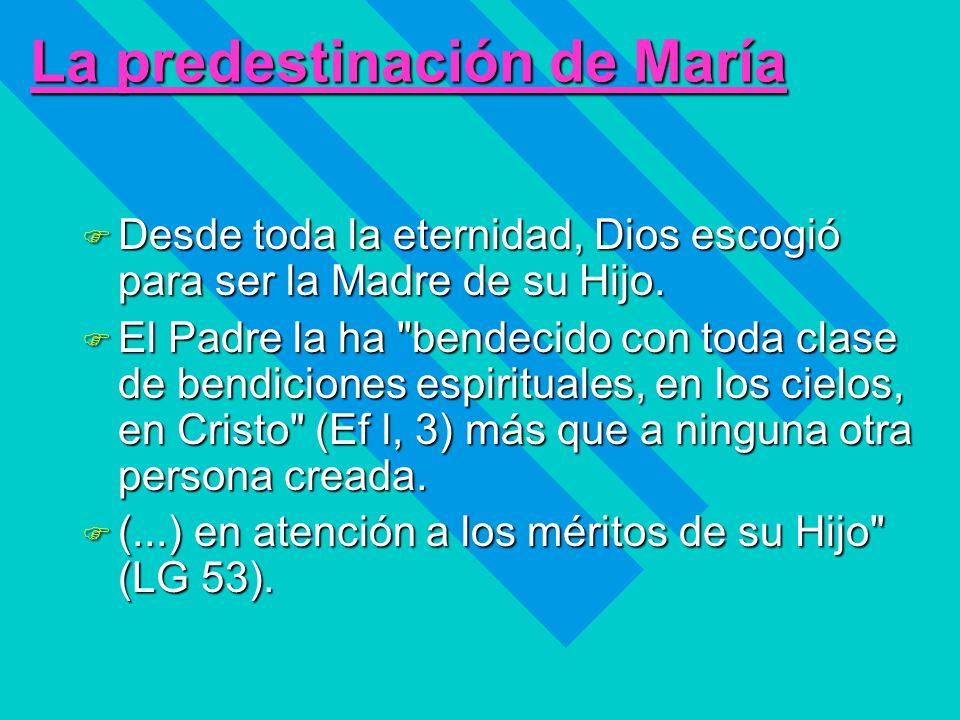 La predestinación de María