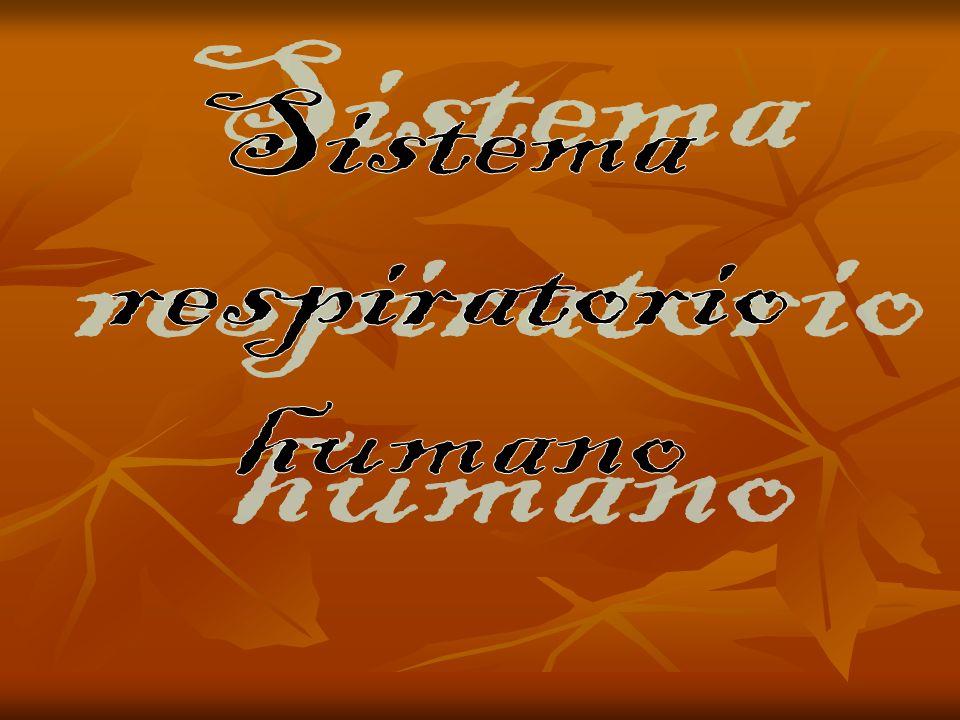Sistema respiratorio humano