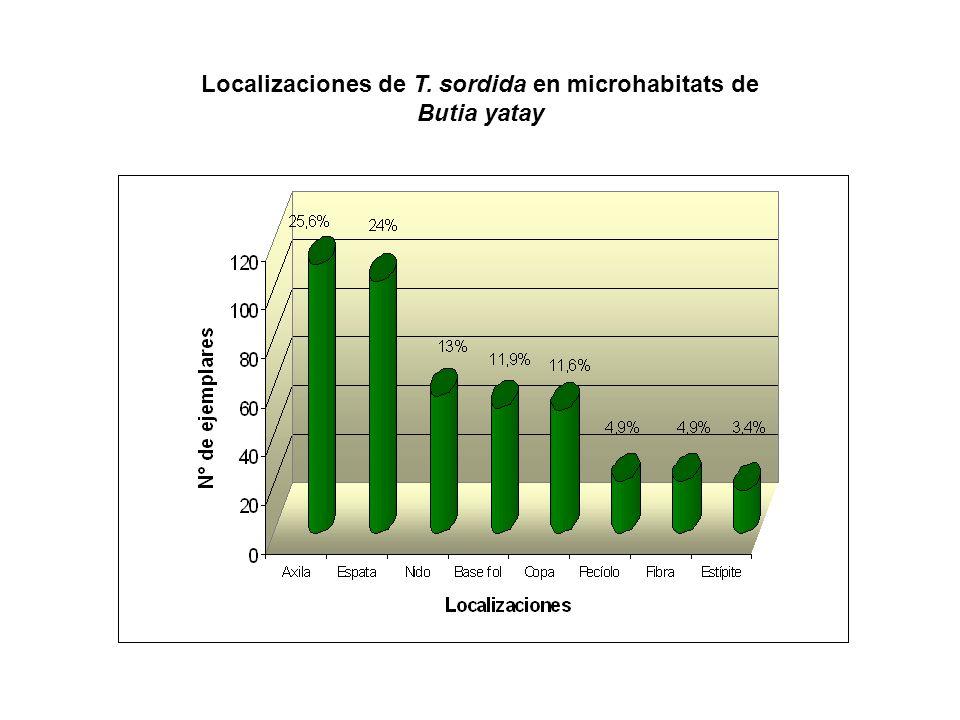 Localizaciones de T. sordida en microhabitats de Butia yatay