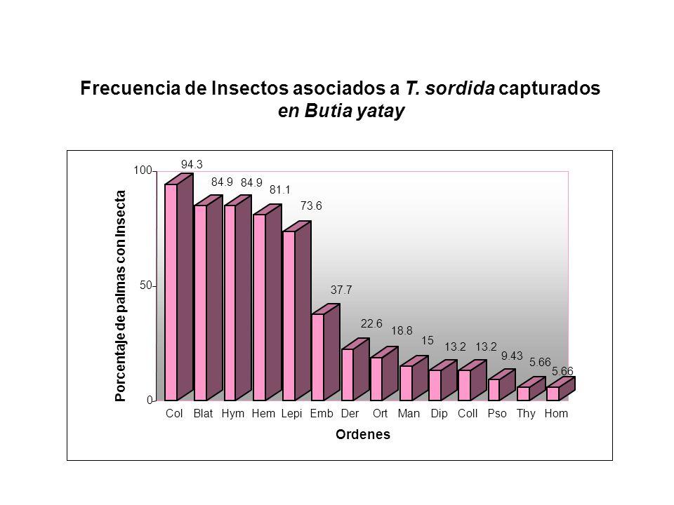 Porcentaje de palmas con Insecta