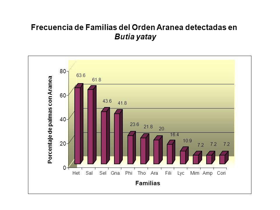 Frecuencia de Familias del Orden Aranea detectadas en Butia yatay