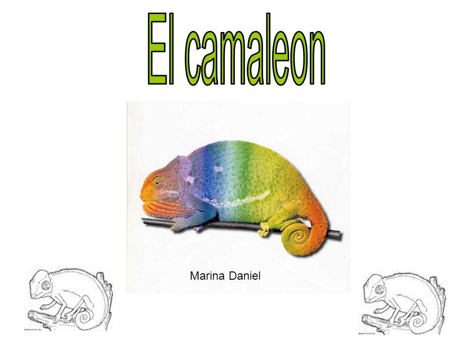 El camaleon Marina Daniel