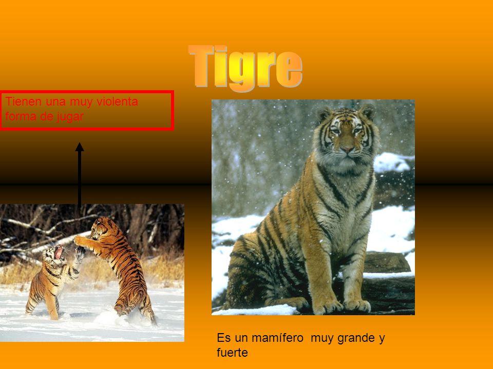 Tigre Tienen una muy violenta forma de jugar