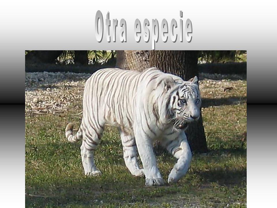 Otra especie